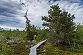 Boardwalk on Kivitunturi, Savukoski, Lapland, Finland, 2021 June.jpg