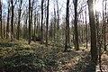 Bois de la Louvière - Livierenbos, Flobecq - Vloesberg 14.jpg