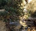 Bokek Stream (9693884713).jpg