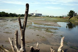 Booterstown marsh - The marsh at low tide, from the southeastern boundary looking northwest. Right - the railway line; Left - the Rock Road (2007)