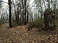 Bosque de encinos - Sierra de Santa Rosa, Guanajuato, Gto.jpg