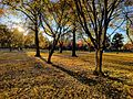 Boston Common in the fall 03.jpg