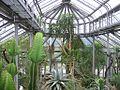 Botanischer Garten Berlin Greenhouse 6.jpg