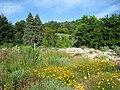 Botanischer Garten der Universität Würzburg - IMG 6817.JPG