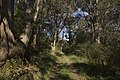 Bowral NSW 2576, Australia - panoramio (117).jpg