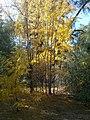 Boyce Thompson Arboretum, Superior, Arizona - panoramio (25).jpg
