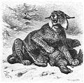 Brehms Het Leven der Dieren Zoogdieren Orde 4 Los (Lynx vulgaris).jpg