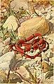 Brehms Tierleben - allgemeine Kunde des Tierreichs (1911-1921) (20225402388).jpg
