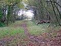 Bridleway, Holt Heath - geograph.org.uk - 1589546.jpg