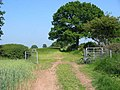 Bridleway near Great Gate - geograph.org.uk - 458844.jpg