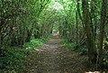Bridleway through Larkey Valley Woods - geograph.org.uk - 984258.jpg