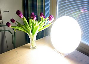 Light therapy can help alleviate the symptoms of seasonal affective disorder.