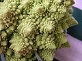 Broccoli DSCN4577.jpg