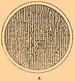 Brockhaus and Efron Encyclopedic Dictionary b14 726-1.jpg