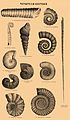 Brockhaus and Efron Encyclopedic Dictionary b76 736-0.jpg