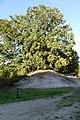Brunssummerheide P1310847.jpg