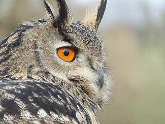 Aninimal Book: Portal:Birds - Wikipedia