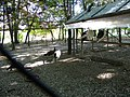 Bucuresti, Romania, Parcul Herastrau (Pauni); B-II-a-A-18802.JPG