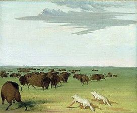 BuffaloHunters