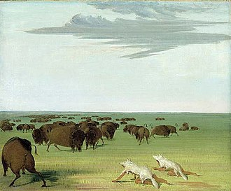 Blackfoot Confederacy - Bison hunters with wolf skin disguises.