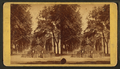 Bull Street, Savannah, Ga, from Robert N. Dennis collection of stereoscopic views 6.png