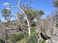 Bushland Crackenback.jpg
