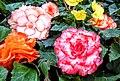 Butchart Gardens - Victoria, British Columbia, Canada (29030224756).jpg