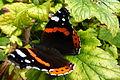 Butterfly (7963818804).jpg