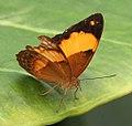 Butterfly 10a (30760386302).jpg