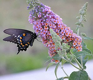 Attract Butterflies and Hummingbirds with Garden Plants