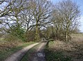 Byway near Whitway - geograph.org.uk - 360665.jpg