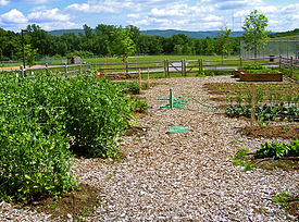 Outline Of Organic Gardening And Farming Wikipedia