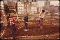 "CITY ""FARMERS"" PLANT FLOWERS AND VEGETABLES IN PLOTS ASSIGNED BY COMMUNITY ASSOCIATION. THE SQUARE BLOCK, FORMERLY... - NARA - 551619.tif"