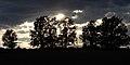 CONTRALUZ DE LOS ROBLES - panoramio.jpg