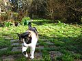 Calico cat named Iris-zenera-01.jpg