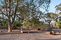 Campsite at Las Vegas Bay Campground (fd2de2fd-3430-42b1-a928-74c17cae1d6e).jpg