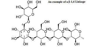 n glycosidic bond  Glycosidic bond