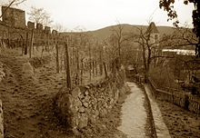 Vineyards cover the steep mountainsides; the walls of a ruined castle rise above the vineyards and a narrow path leads to a small village.
