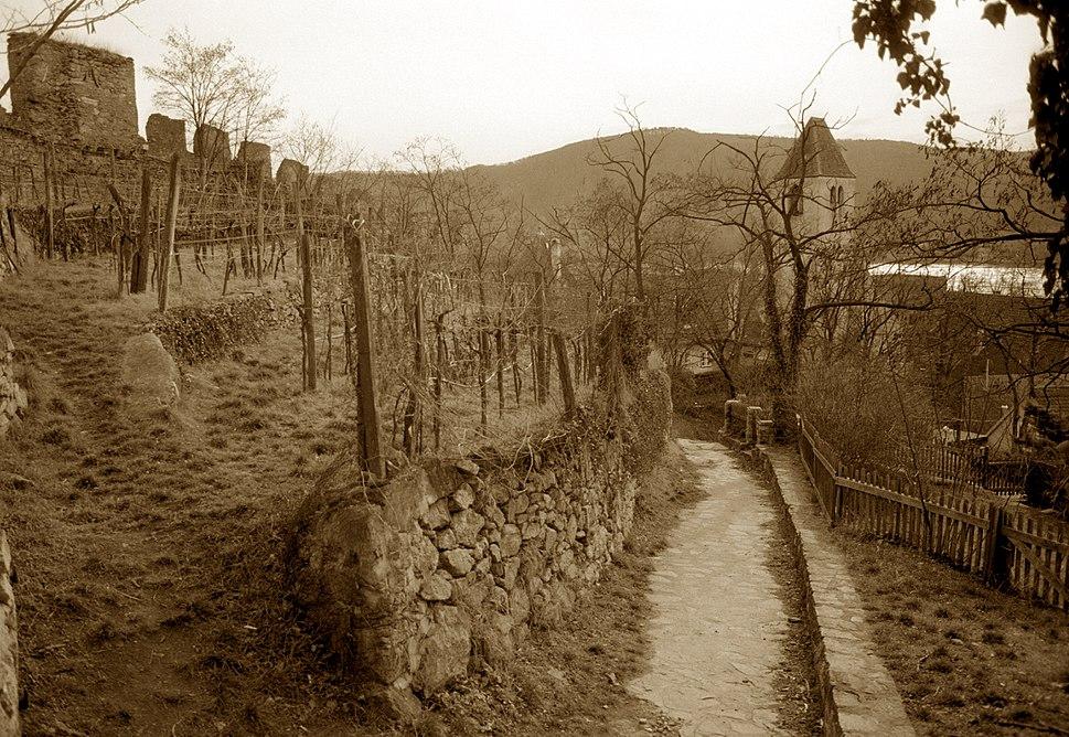 Castle Ruins and Vineyard - Durnstein - Wachau Valley - Austria - image by Scott Williams