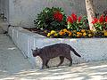 Cat in Valun.jpg