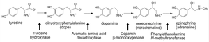 Chromaffin cell - Image: Catecholamine biosynthesis