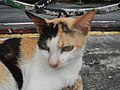 Cats in t1302Cats in the Philippines 23.jpg