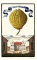 Cedro a Dittela Volkamer 1708 116c.png