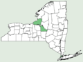 Centaurea scabiosa NY-dist-map.png
