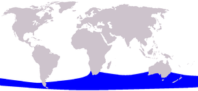 alt=Description de l'image Cetacea range map Pygmy Right Whale.png.
