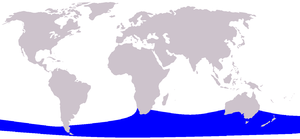 Pygmy right whale - Image: Cetacea range map Pygmy Right Whale
