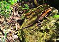 Chameleon (9219222701).jpg
