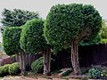 Chiltern Park Estate, Berkhamsted - geograph.org.uk - 1456989.jpg
