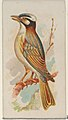 Chinese Bulbul, from the Song Birds of the World series (N23) for Allen & Ginter Cigarettes MET DP835268.jpg