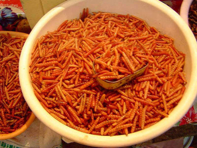 Chinicuiles for sale at a Mexican market.